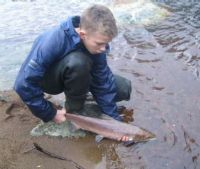Draperstown angler Michael O'Kane returns a fine hen salmon to the Moyola.
